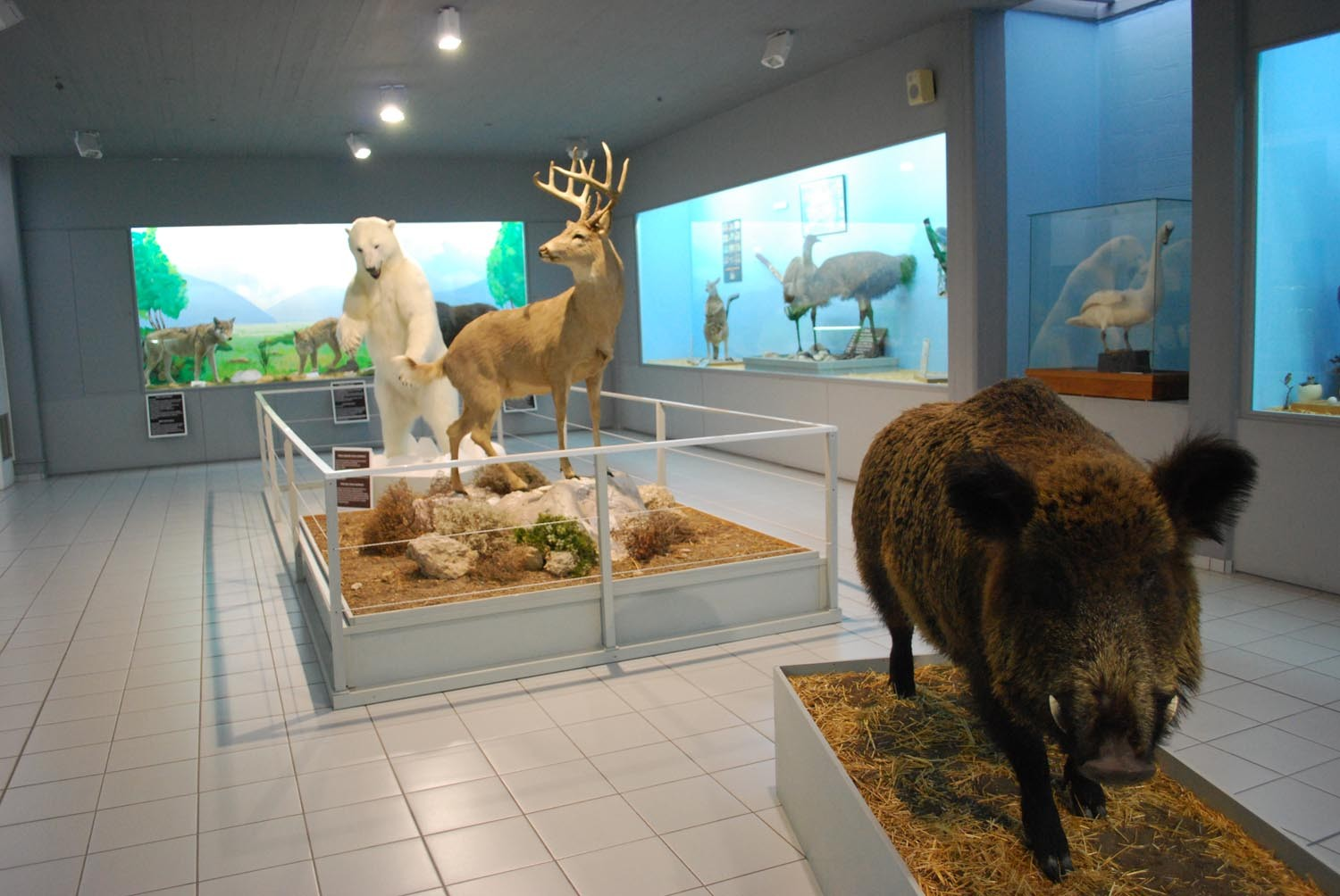 Palaeontological museum of Samos, in-samos